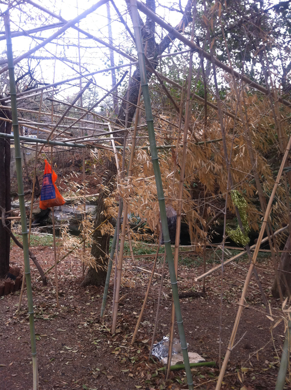 Wesley prep bamboo forest structure peter brown
